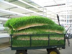 Заготовка зеленого корма на 7 мой день